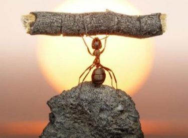 İşyerine Karınca Duası Neden Asılır?