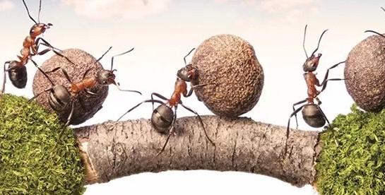 İşyerine Karınca Duası Neden Asılır? ANLAMI NEDİR? Yeni İş Fikirleri