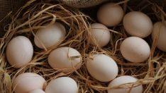 Toptan Köy Yumurtası Satışı