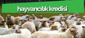 hayvancılık-kredisi-başvuruları