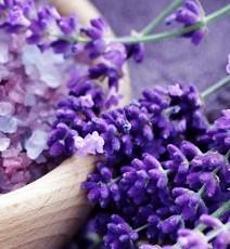 lavanta-çiçeği