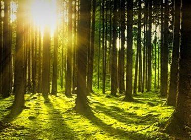 Ormandan İzinsiz Ağaç Kesmenin Cezası (2018 GÜNCEL)