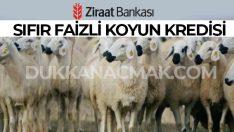 Ziraat Bankası Sıfır Faizli Koyun Kredisi 2018-2020 Şartları