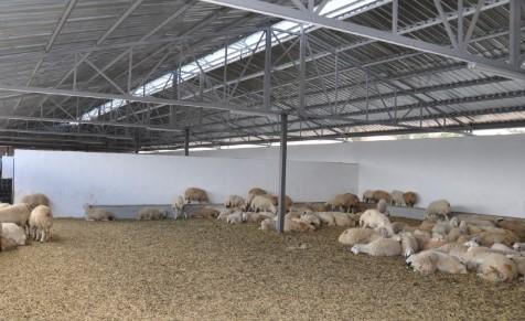 Küçükbaş Hayvan Çiftliği Proje Örnekleri (100 Koyun Teşvikli) Hayvan Kredisi