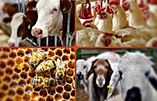 Hayvancılık Alanında Verilen Destekler
