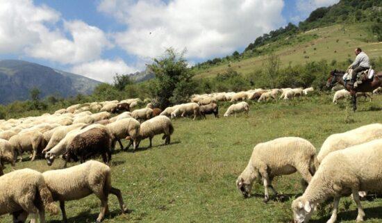 100 Koyun Para Kazandır Mı?