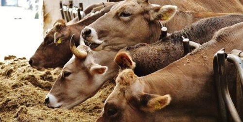 süt-parası-başvuru-şartları