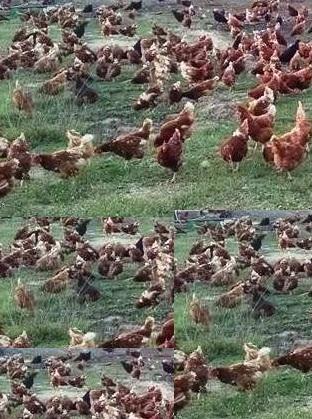 Adana toptan yumurta satışı
